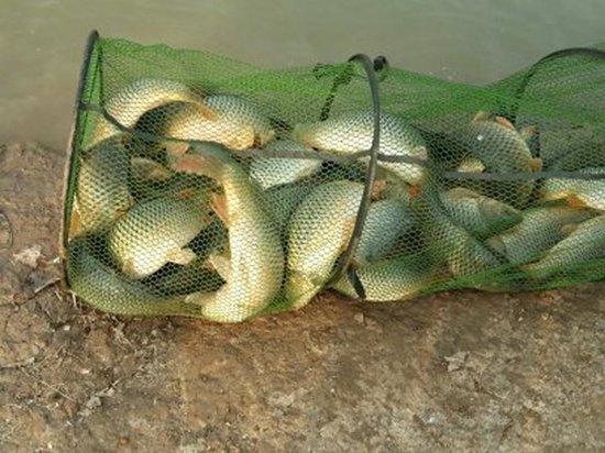 新手初春钓鱼必知的钓位选择与饵料搭配方法