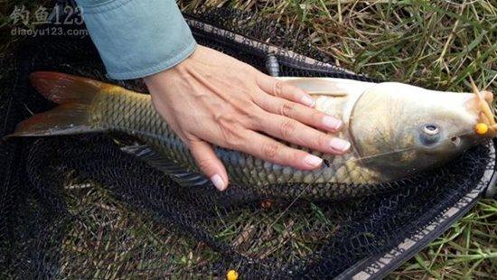 池塘春季钓鲤鱼的钓位与钓法选择