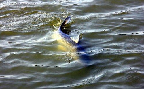 夏季水库底钓大鱼的经验技巧与前期准备