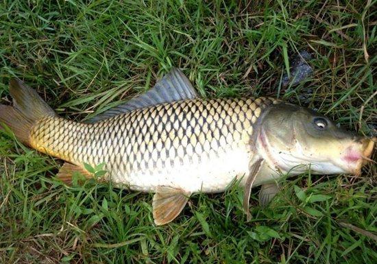 夏季水库钓鲤鱼的钓点、时间与天气解析
