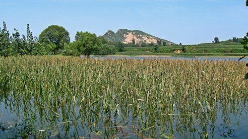 深秋水库矶竿钓大鱼 涨水后野钓玉米地