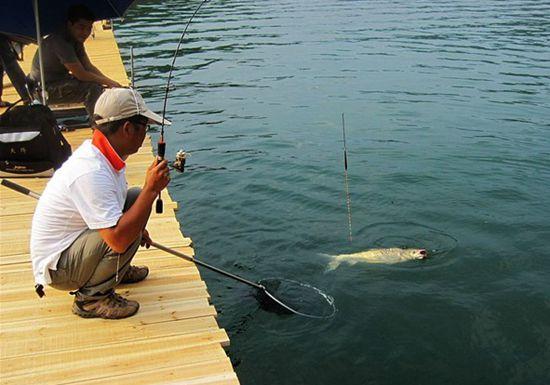 传统钓法中排钓的五大技巧