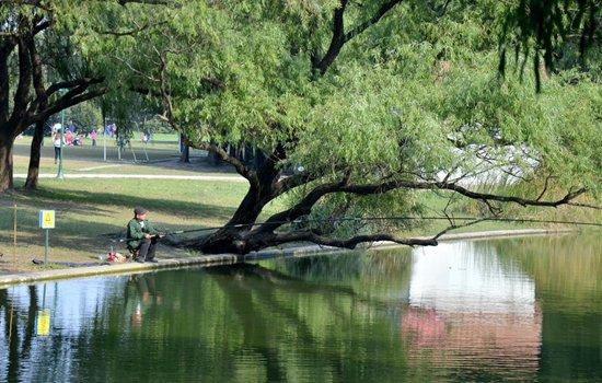 秋季池塘钓大草鱼的技巧