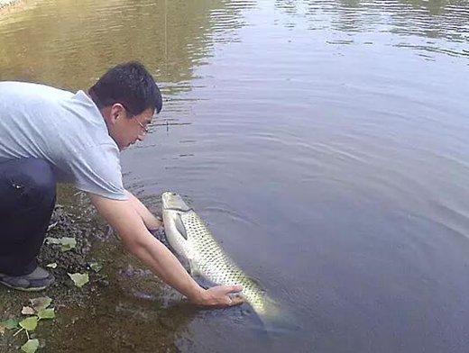 夏季是钓草鱼的好季节 钓草鱼的实用技巧