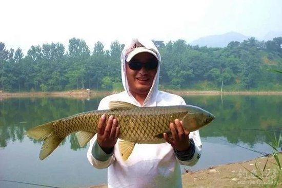 夏季野钓草鱼的实战经验总结