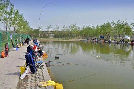 鱼塘钓草鱼有诀窍 钓远还是钓近有选择