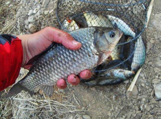 夏季野钓鲫鱼如何把握钓时、钓点与诱饵