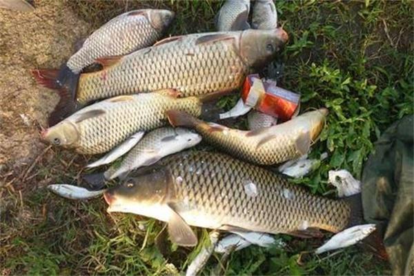 夏季野钓鲤鱼困难多?掌握这些知识点,让你每次都能满载而归