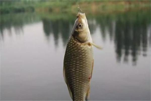 夏季钓不到鱼是技术差?老渔民告诉你是这3个原因