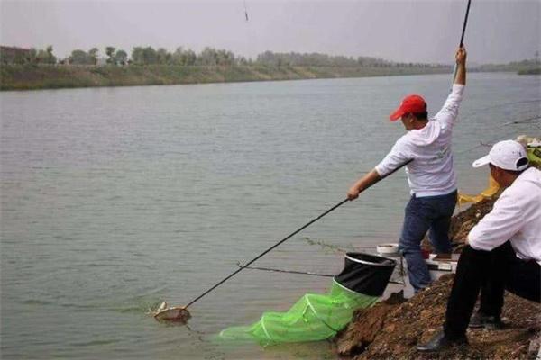 野钓看到鱼儿进窝,但是却迟迟没有吃口?老渔民告诉你实情