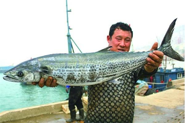 鲅鱼怎么钓才愿意上钩 最快速钓鲅鱼技巧