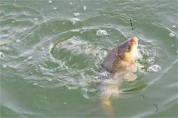 鱼要怎么溜 溜鱼六大技巧详解