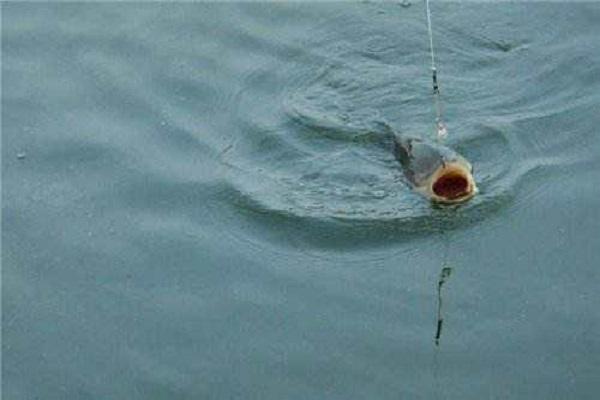 野钓对渔获影响客观因素是什么 影响野钓渔获三大客观因素详解