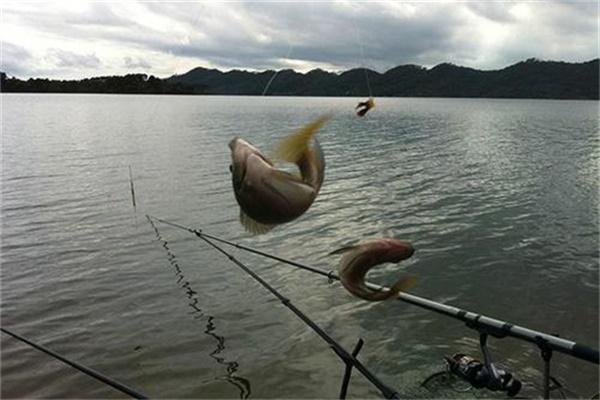 水库钓鱼怎么选择钓位,知道这些技巧让你野钓不空军