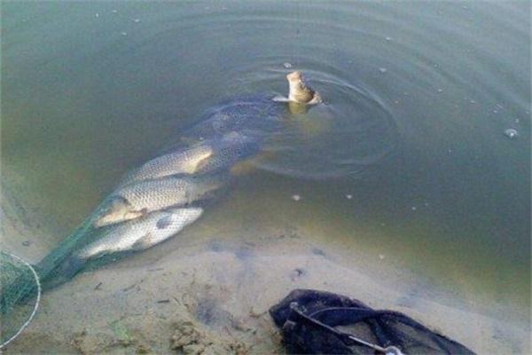 时间段对鱼有什么影响 看时间掌握鱼作息时间