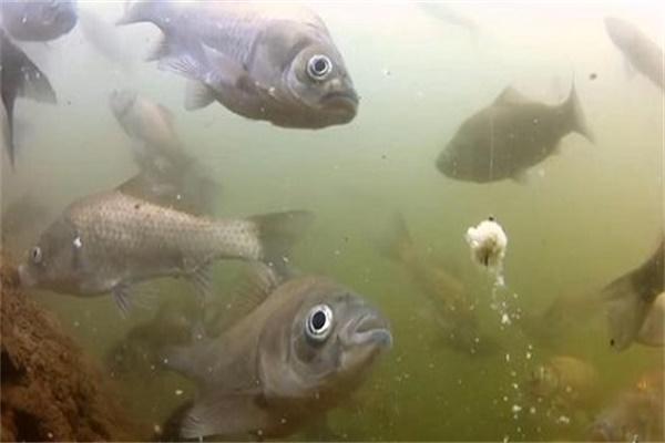 鱼吃饵有什么特征 鱼吃饵方式特征介绍