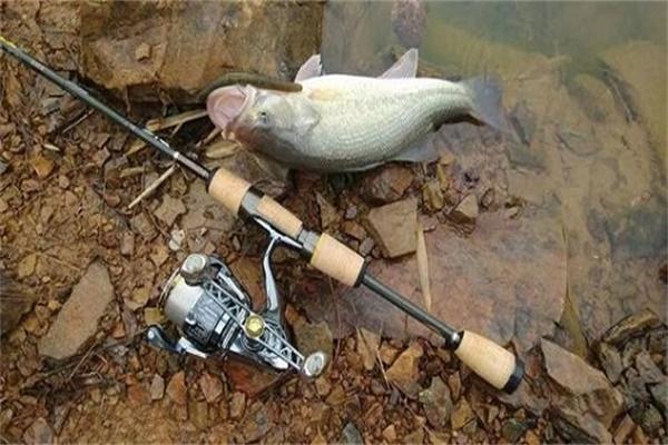 为什么初学路亚钓不到鱼