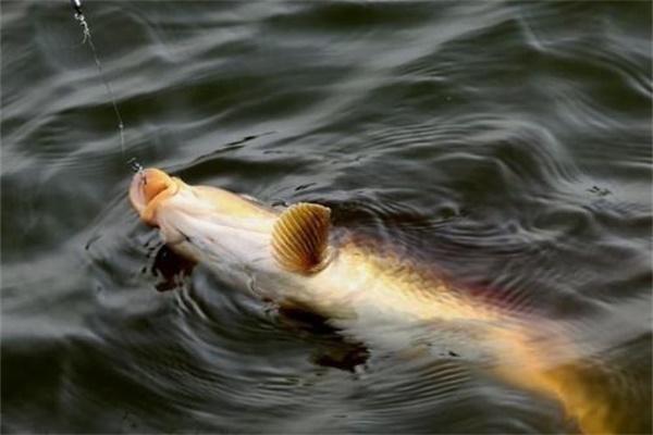 怎样正确抄鱼 抄鱼方法介绍
