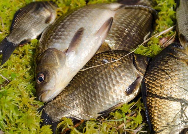 跟着大神去钓鱼,一样的鱼竿,一样的鱼饵,为什么就你是空杆
