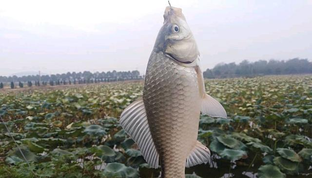 冬季出钓只有传统钓才是王道