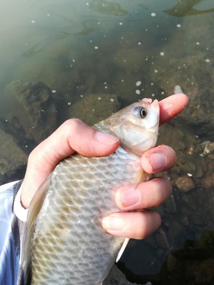 台钓与传统钓的优势分析,台钓和传统钓的结合使用
