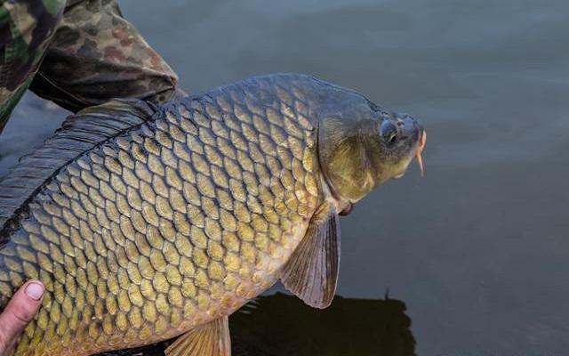 大江大河钓目标鱼?饵料的味型与钓位要选择正确
