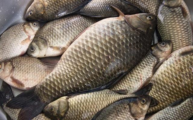 冬季自然水域钓鲫鱼,钓位选择有三点
