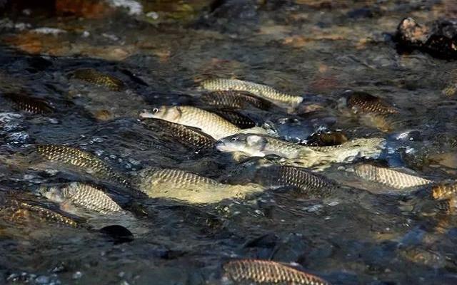 纽带型河流的钓鱼技巧和钓位选择解析