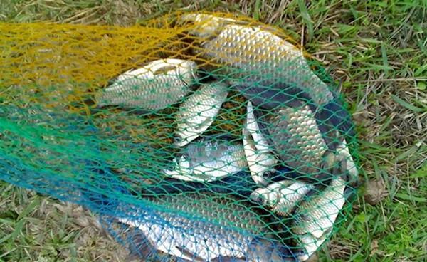 钓鱼找鱼道、鱼窝,这里鱼儿扎堆,鱼获肯定差不了