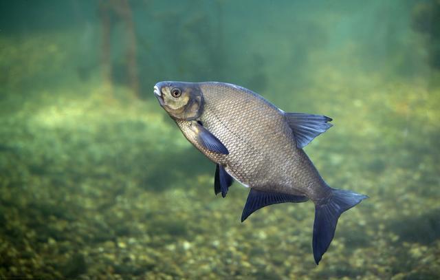 小鱼多该怎么钓?当然是用小鱼垂钓掠食性鱼