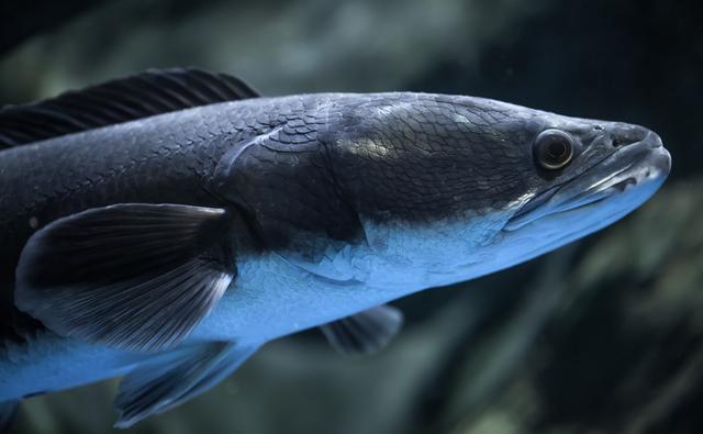 手竿作钓黑鱼有技巧,注意搭配和选择