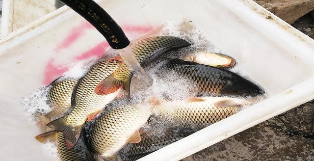 一幅鱼线让钓友丢掉性命,千万不能大意