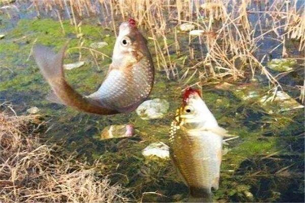 冬季手竿野钓10选,让你不断上鱼!