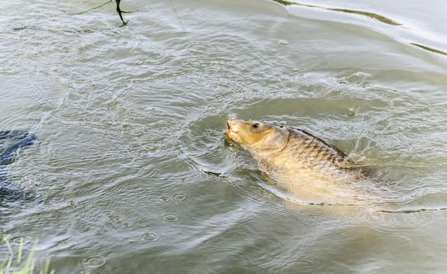 冬季钓鲫鱼,为什么鱼情差?有5个常识性的错误