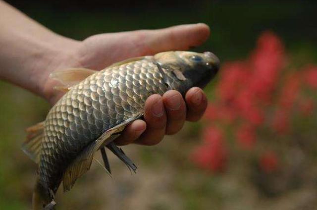 台钓过程中,最为常见的七种鱼口