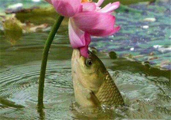 二十年草鱼不是白钓的 四大技巧钓到爽
