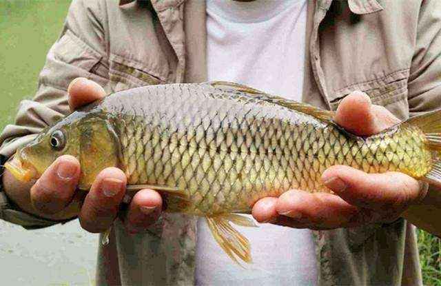 钓鲤鱼怎么减少脱钩切线?