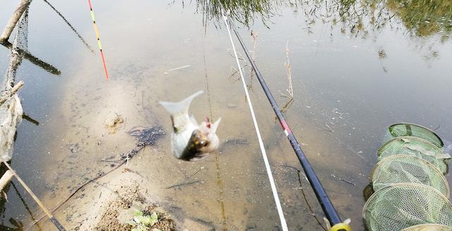 能钓多少鱼,并不是靠饵料、小药和打窝