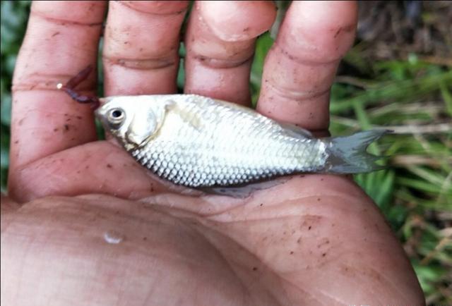 水库河沟钓鱼,草洞里钓获一条8斤鲤鱼