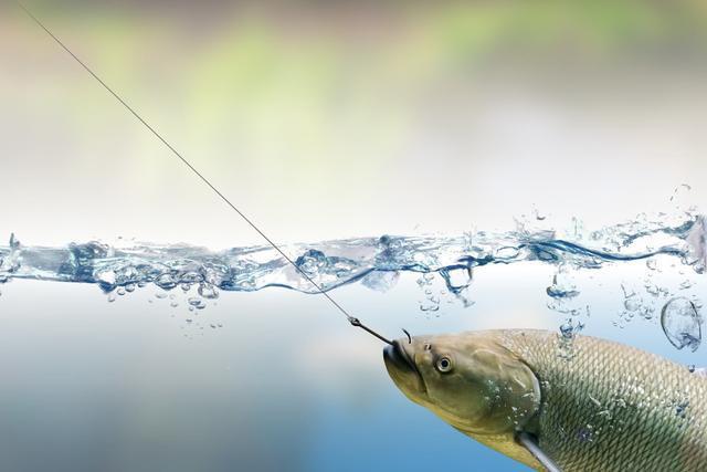 鲤鱼会吃螺丝吗?小编告诉你