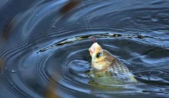 这几种钓鱼行为会惊窝