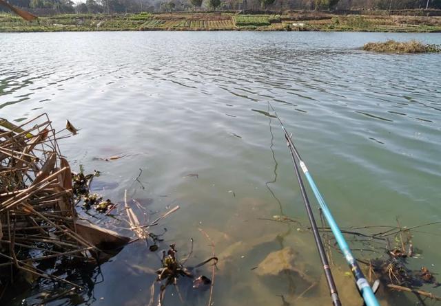 频频空杆如何破局?钓滑口鱼实用技巧