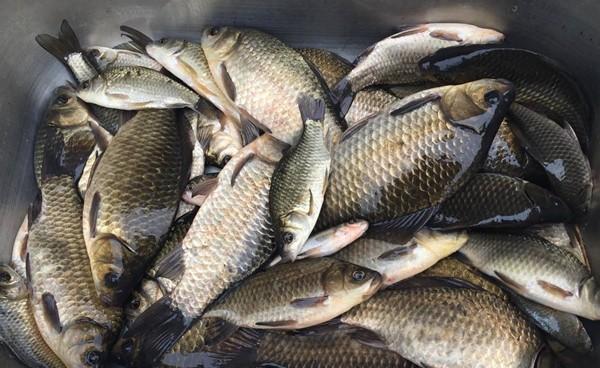使用拉饵钓鱼,常用的几种好用调漂方法