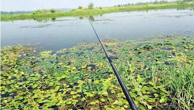 长竿短线的传统钓,用几米的鱼竿才合适