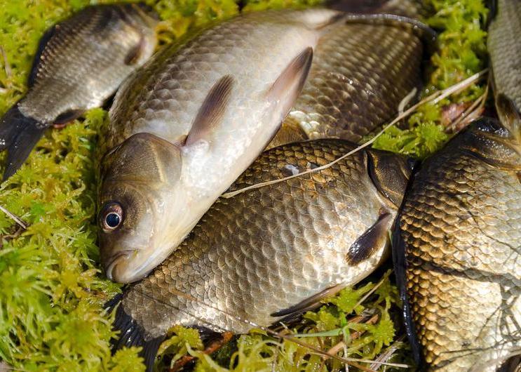 冬季怎么使用传统钓,传统钓的优势