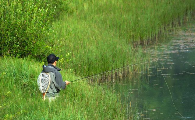 初夏钓草鱼,要学会这几种钓法