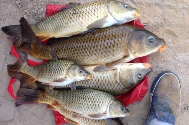 冬季钓鱼传统钓有什么优势?