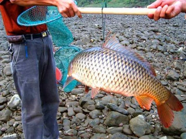 水库钓大鲤鱼经常选择的几个钓点