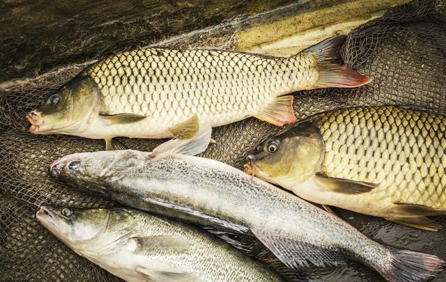 遇到鱼情不好时该如何应对呢?这些方法可以解