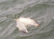 钓轻口鱼的浮漂选择及调钓技巧